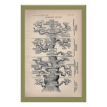 Tree Of Life / Pedigree Of Man Print