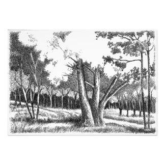 Tree of Life Photo Print