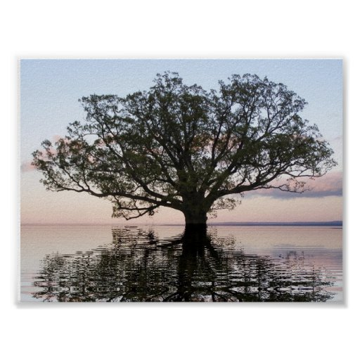 Tree of Life (Reflections) Poster