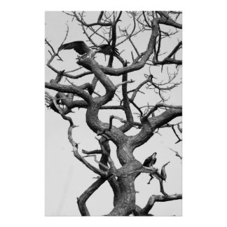 Tree of  Ospreys Poster