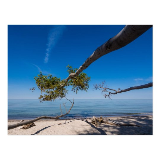 Tree on a beach on shore of the Baltic Sea Postcard