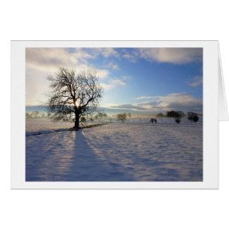 Tree on Moor Beck Card