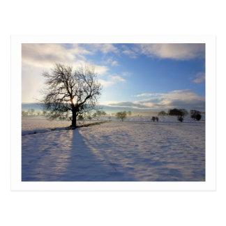 Tree on Moor Beck Postcard