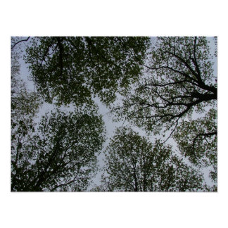 Tree paths in the sky poster