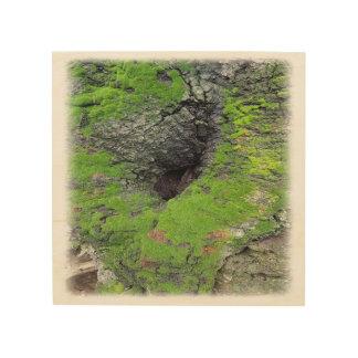 Tree Photo on Wood Wood Print