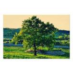 Tree Photo Print