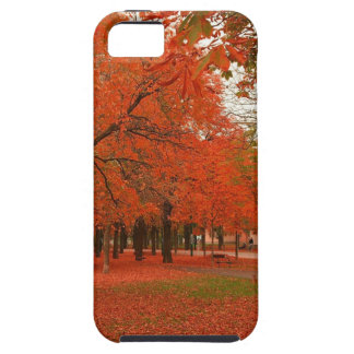 Tree Red Autumn Leaves Case For iPhone 5/5S