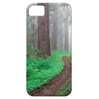 Tree Redwood California iPhone 5 Cases