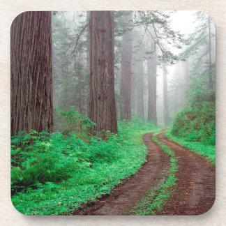 Tree Redwood California Coaster