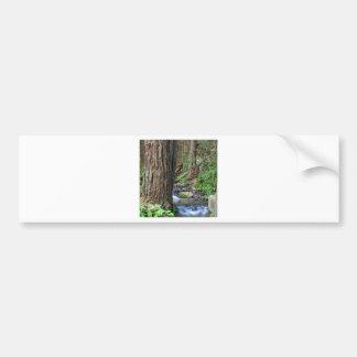 Tree Redwood Stream Bumper Stickers