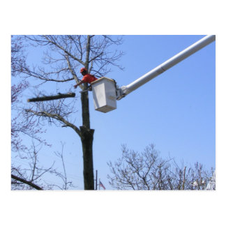 Tree Removal ~ postcard