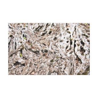 Tree root composition canvas print