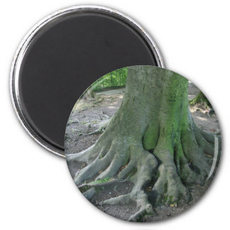 Tree Roots 6 Cm Round Magnet