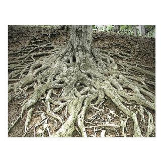 Tree Roots Postcard