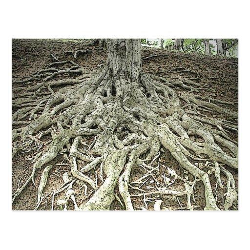 Tree Roots Postcards