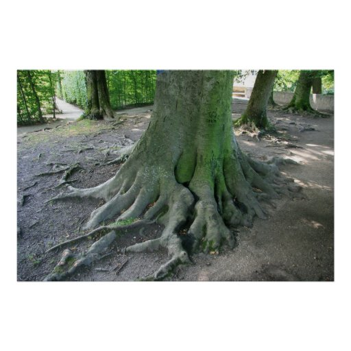 Tree Roots Poster