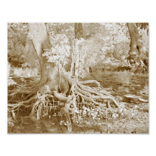 Tree roots posters