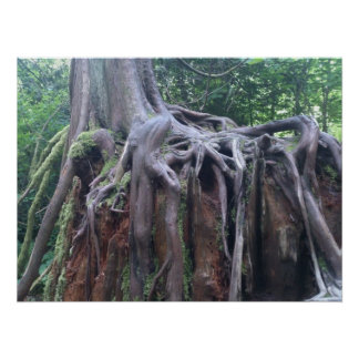 Tree Roots Print