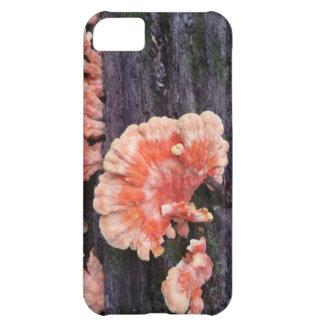 Tree Rot iPhone 5C Case