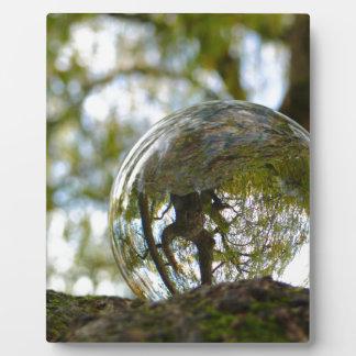Tree seen through a crystal ball photo plaque