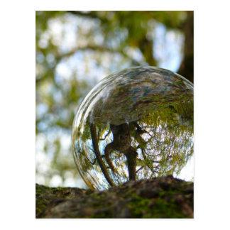 Tree seen through a crystal ball postcard