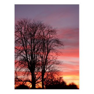 Tree Silhouette at Sunset Postcard