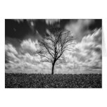 tree silhouette black and white landscape note card