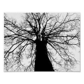 Tree Silhouette in Black and White Poster
