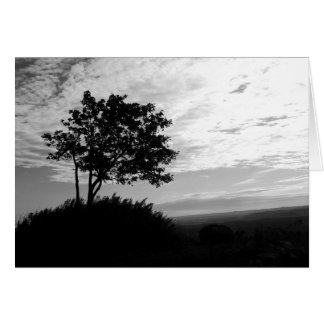 Tree Silhouette Monochrome Card