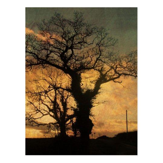 Tree Silhouette Photo Postcard