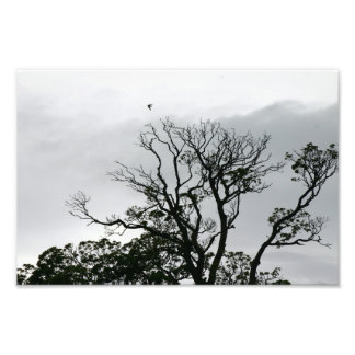 Tree Silhouette Powerscourt Gardens Photo Print