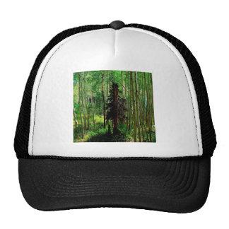 Tree Skinny Birch Mesh Hats