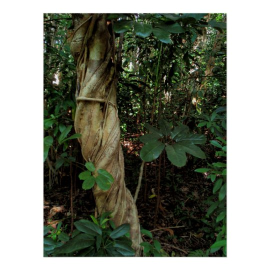 Tree Smothered by Schefflera Poster
