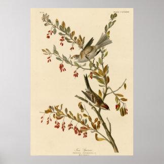 Tree Sparrow Print