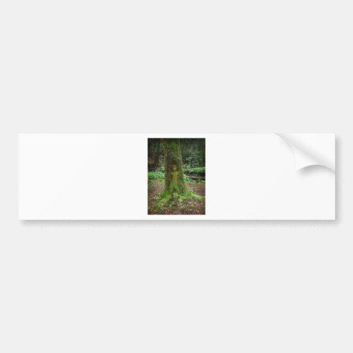 Tree Spirit Bumper Stickers