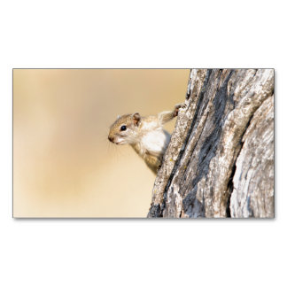 Tree squirrel magnetic business cards