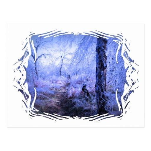 Tree Stump by Trail Postcard