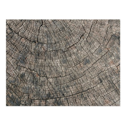 Tree Stump Closeup Post Card