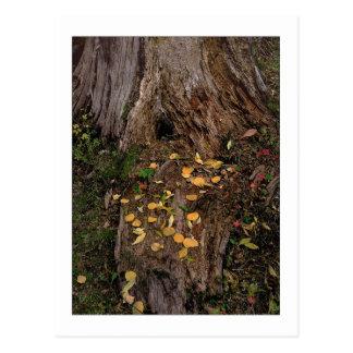 """Tree Stump & Fodder"" Postcard"