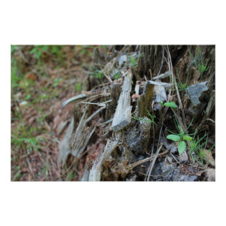 Tree stump photo poster