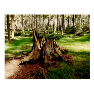 Tree Stump Postcard