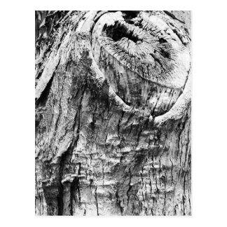 Tree Stump Postcard