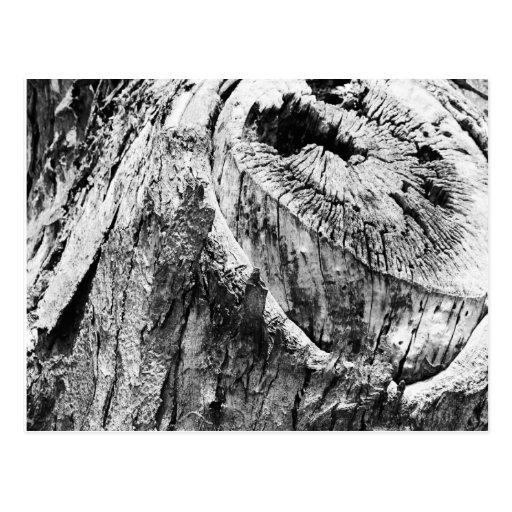 Tree Stump Post Card