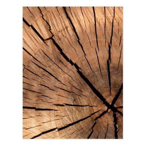 Tree Stump Texture Postcard