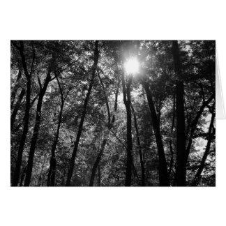Tree & Sun (1) Card