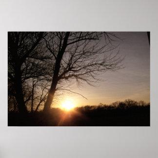 Tree-Sunset Poster
