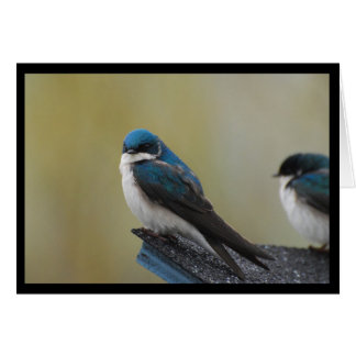 Tree Swallow Note Card (blank)