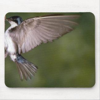 Tree Swallow on tree trunk Mousepad