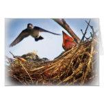 Tree Swallow's Nest Feeding Time