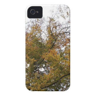 TREE TOP IN AUTUMN iPhone 4 COVERS